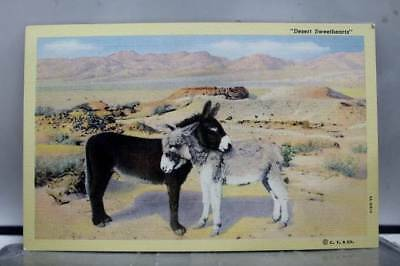 Scenic Desert Sweethearts Postcard Old Vintage Card View Standard Souvenir Post