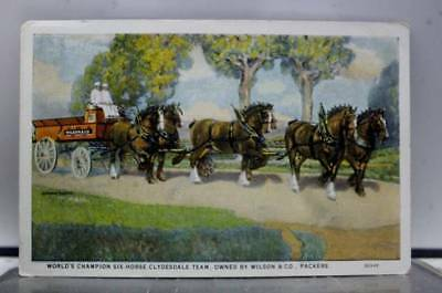 Scenic Six Horse Clydesdale Team Postcard Old Vintage Card View Standard Post PC