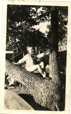1920s boy sitting in a tree at a park photo