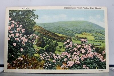 West Virginia WV Rhododendron State Flower Postcard Old Vintage Card View Post