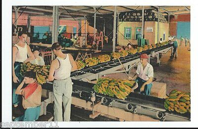 Postcard Unloading Bananas From Ship Side, New Orleans, LA. 1930-40's Excell