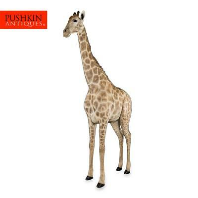 GENUINE 20thC AFRICAN TAXIDERMY 3.90M TALL FULL MOUNT GIRAFFE