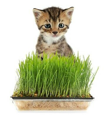 Graines Pour Herbe A Chat