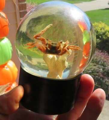 FIDDLER CRAB Rare Vintage Paperweight Nature Gems Educational Embedments (P95)