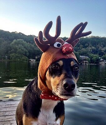 """Reindeer Antlers for extra large dogs with 20-24"""" collar size"""