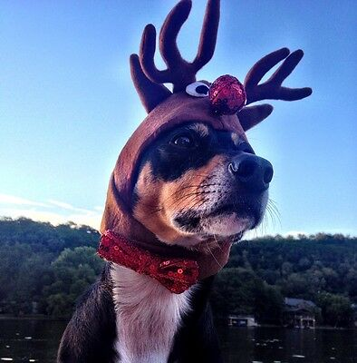 """Rudolph the red nosed reindeer hat for Extra Large dogs 21-26"""""""" collar size"""