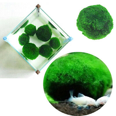 1xMarimo Moss Ball Live Aquarium Aquatic Plants Algae Fish Shrimp Tank Decor new