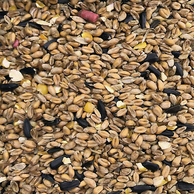 20Kg Garden Wild Bird Seed Food suitable for feeders and bird tables small seeds