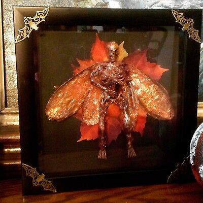Dead Fairy shadow box Oddity for Cabinet of Curiosities Sideshow Gaff