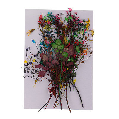 14pcs Real Pressed Dried Flowers Leaves for Art Craft Scrapbook Card Making