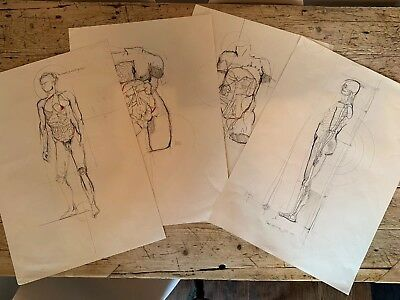 Original Vintage Medical Drawing Sketch's X4