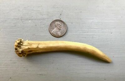 Antique SMALL DEER ANTLER AWL TOOL - Well Used Native Object