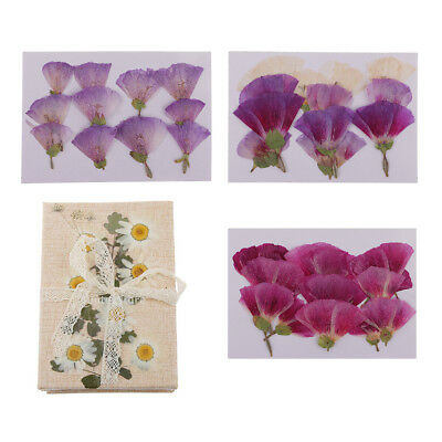12x Real Pressed Dried Flowers For Resin Jewelry Mold Filler Decor Craft DIY