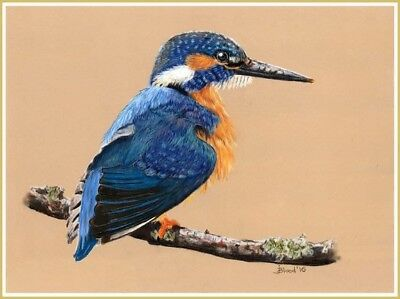 Original framed pastel painting of a Kingfisher