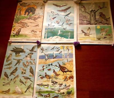 Striking 1948 Jacob Bates Abbott Pa Game Commission Official Wildlife Posters--5