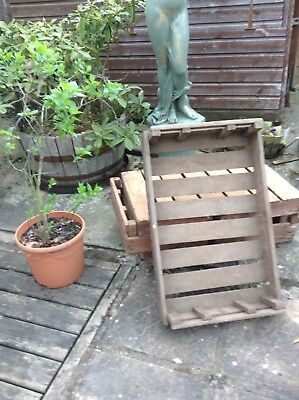 10 X Vintage Potato Chitting Tray/apple Crate