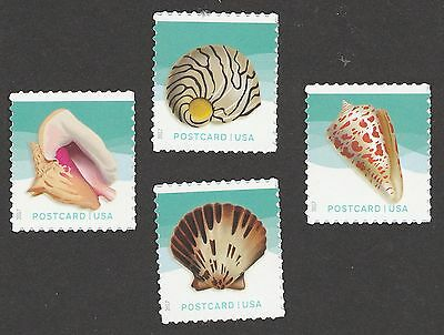 US 5163-5166 Seashells postcard set (4 stamps) MNH 2017