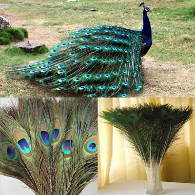 100Pcs Natural Color Peacock Feathers 10-12inch/25-30cm with Eyes DIY Decoration