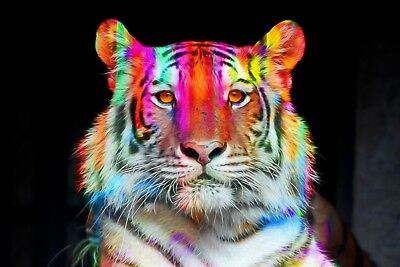 """Abstract Tiger - Modern Art Animal Colourful Large Framed Canvas Picture 20x30"""""""
