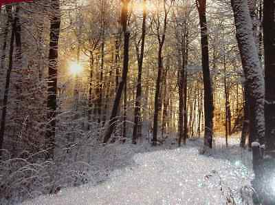16 Christmas Cards Quiet Peaceful Snow Covered Forest in Setting Sun Glitter