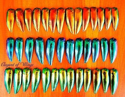 1 Lot of 25 Blue 25 Green 25 Copper Red Jewel Elytra Beetle Wings Jewelry Design