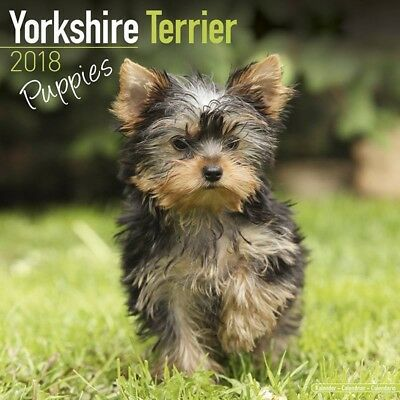 Calendrier Yorkshire Terrier Puppies 2018