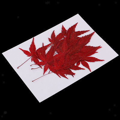 12x Real Dried Leaves Maple Leaf Embellishment for DIY Phone Case Decoration