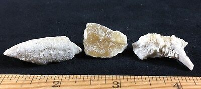 Assorted Calcite Replacing Fossil Clam-Coral-Snail - Ancient Florida Coral Reef