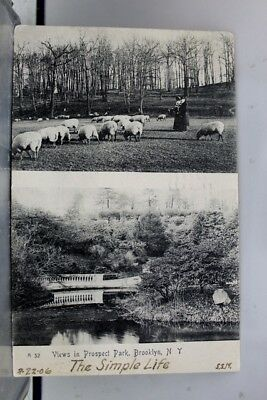 New York NY Prospect Park Brooklyn Postcard Old Vintage Card View Standard Post