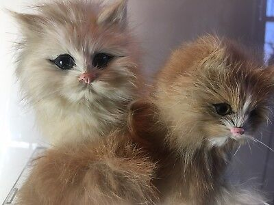 Vintage Real Rabbit Fur Kittens Cats Sitting Twins w/ Bow Realistic Kitty Figure