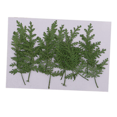 12pcs Real Dried Flower Leaves Wormwood for DIY Christmas Card Making Green