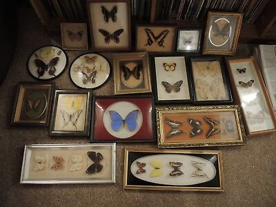 Framed Butterflies Various Shapes and Sizes - Set of 17!