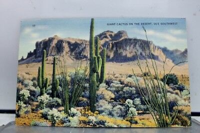 Scenic Southwest Giant Cactus Desert Postcard Old Vintage Card View Standard PC