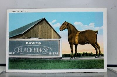 Scenic Land of the Free Dawes Black Horse Ale Biere Postcard Old Vintage Card PC