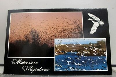 Scenic Midwestern Migrations Postcard Old Vintage Card View Standard Souvenir PC