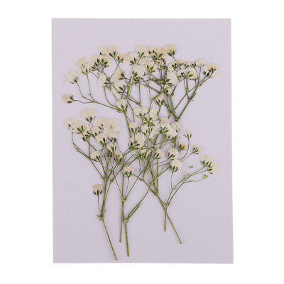 10x Pressed Dried Flowers Real Babys Breath for DIY Art Crafts Scrapbooking