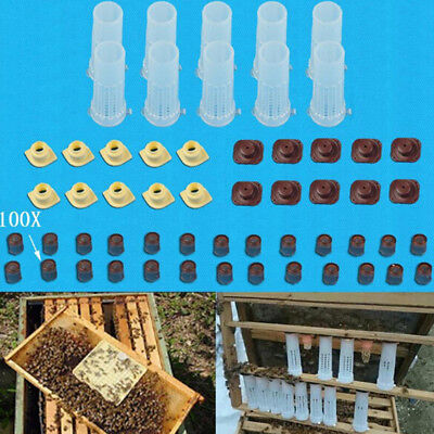 Complete queen rearing cup kit system bee beekeeping catcher box & 100 cell c JX