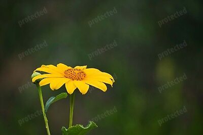 Stunning Digital Photography Picture Wallpaper yellow flower, blooming