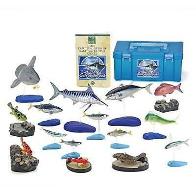 Colorata Salt Water Fish Solid Illustrated Book Real Figure Box, from Japan
