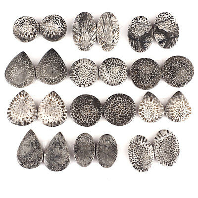 24 Pcs/12 Pairs Natural Black Fossil Coral Top Quality Untreated Gems 17mm-26mm