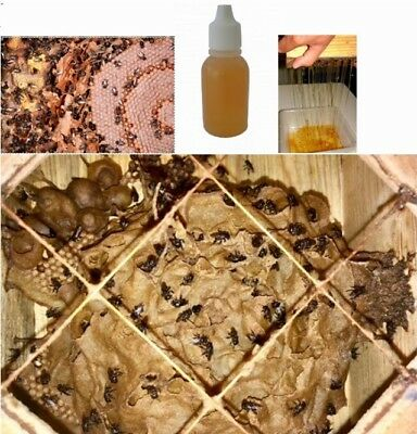 Melipona Honey 10ml, Eye Drops, Local Producer, Best Price And Availability