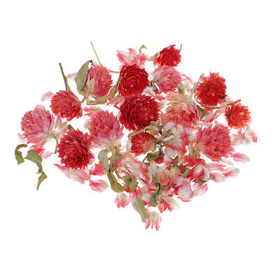 4g Real Dried Flower Globe Amaranth for Jewelry Making Resin Casting Craft