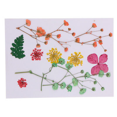 Beautiful Press Dried Flowers Leaves for Art Craft Scrapbooking Card Making