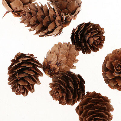 60x Dried Pinecones Natural Pine Cone Decor for Vase Filler Party Ornaments