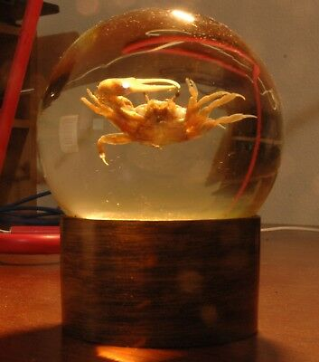 FIDDLER CRAB Rare Vintage Paperweight Nature Gems Educational Embedments