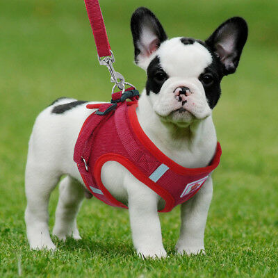 Soft Mesh Small Dog Harness Step-in Puppy Harness Leash Set Pet Jacket Vest #AM8