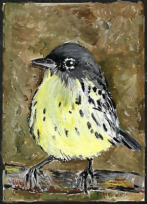 ACEO Original Painting Art Card Acrylic Kirtland Warbler 100% Hand Painted
