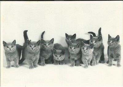 CP Chatons
