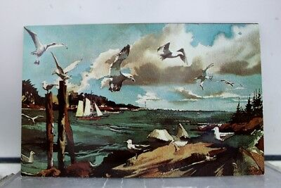 Art Laurence Sisson Maine Coast Gulls Postcard Old Vintage Card View Standard PC