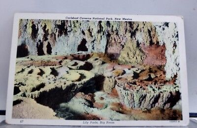 New Mexico NM Lily Pads Carlsbad Caverns Postcard Old Vintage Card View Standard
